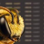 пчела и мед оса насекомые